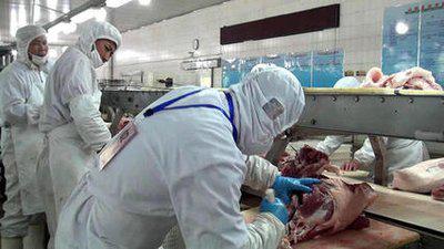 澳大利亚482高薪屠宰场项目招聘