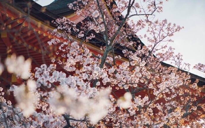 日本水果社定向留学——高端就业